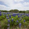 Apr 12-Blue Bonnet Trail, Ennis, TX-0366