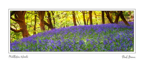 Middleton Woods Panoramic 2x1ratio
