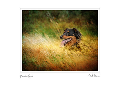 Juno in grass framed A3