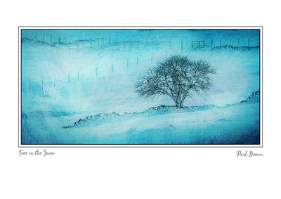 Tree in the snow framed A3