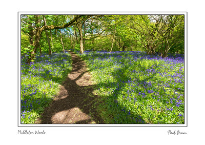 Middleton Woods Shadows Painting  A3 Framed