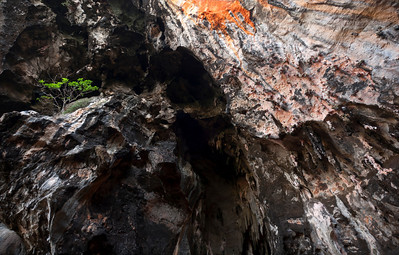 Limestone and Tree, Railay - Thailand  Stalactites drip with moisture from an overhanging limestone cave on the beaches of Thailand's Railay peninsula. The rock climbing here can be fantastic, or downright miserable...its all up to the stone.