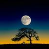 Rusty_Moonrise_Under_Winter_Tree