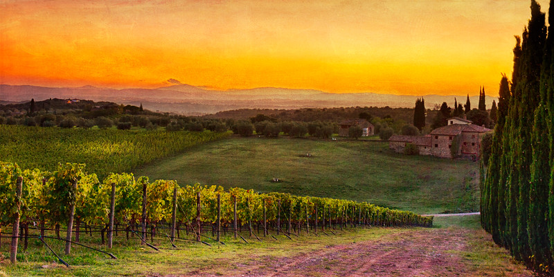 Last Light in the Vineyards of Chianti...