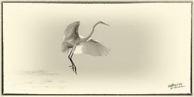 White Heron in Monochrome