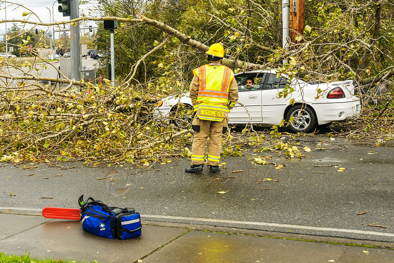 Trapped - A Bellingham fire fighter talks with Ricky Becerra of Ferndale while he is trapped in his car by power lines and tree branches on Friday afternoon Oct 14, 2015, at the intersection of Bennett Drive and Airport Drive in Bellingham, Wash. Becerra says he knew not to get out the car due to the danger of more debris falling and possible electrocution. (© Paul Conrad/The Bellingham Herald)
