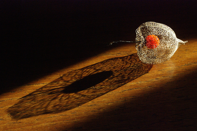 Love in a Cage - Physalis - Chinese Lantern