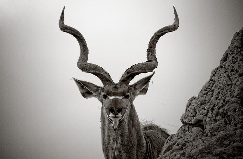 B&W Kudu & Termite Mound