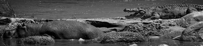 Hippo Croc