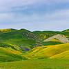 Carrizo Plains Wildflowering '17_274