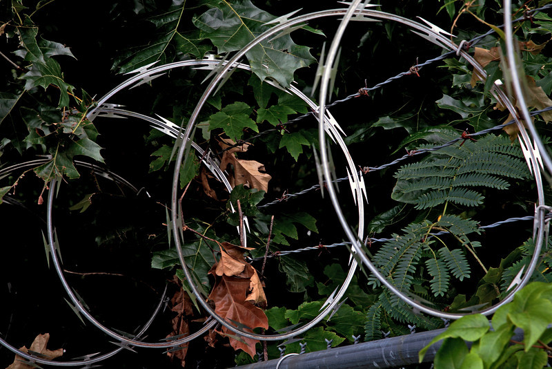 """On the Wire - Raleigh North Carolina  --- <a href=""""http://globalvillagestudio.com/abstracts.html"""">http://globalvillagestudio.com/abstracts.html</a> Kentucky Photography, John Lynner Peterson, Lexington"""