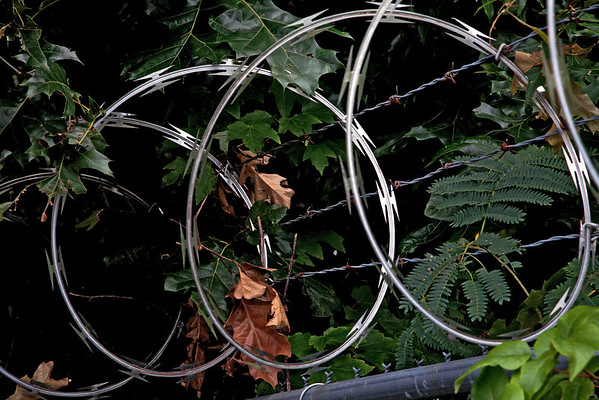 On the Wire - Raleigh North Carolina  --- http://globalvillagestudio.com/abstracts.html Kentucky Photography, John Lynner Peterson, Lexington