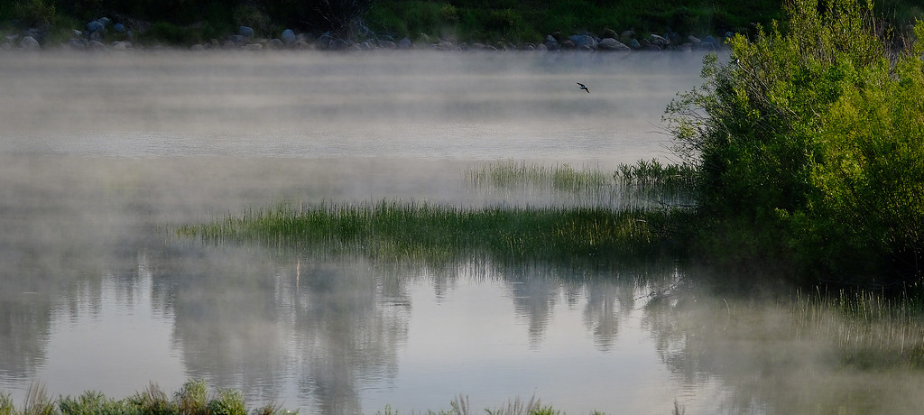 The Lake, The Fog & The Bird