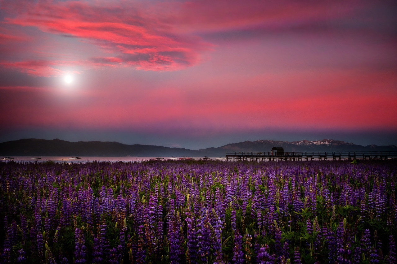 Moon Over Lupine