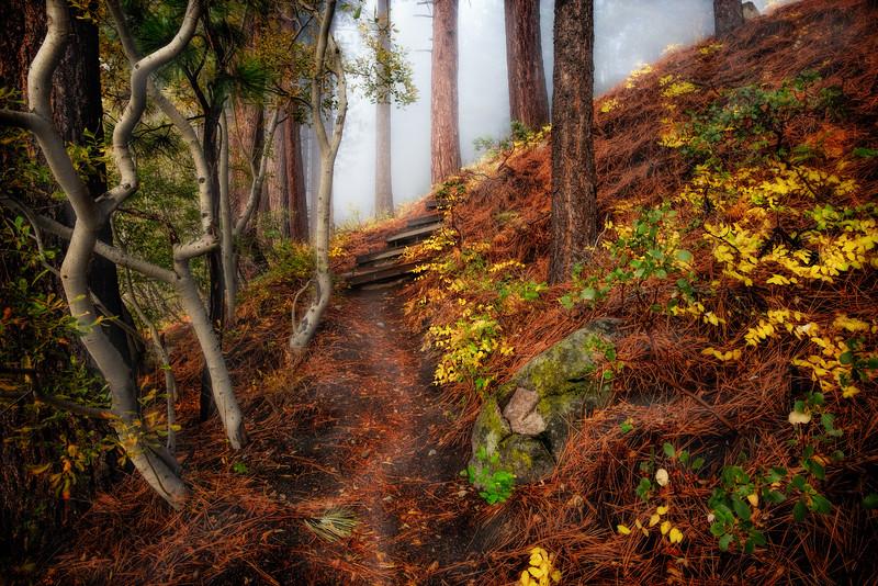 The Hobbity Road