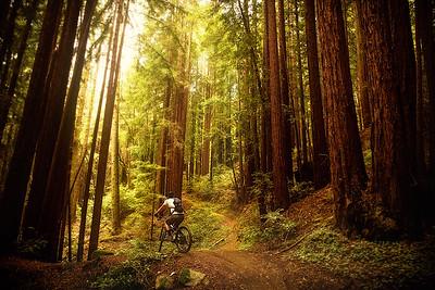 Forest Rider