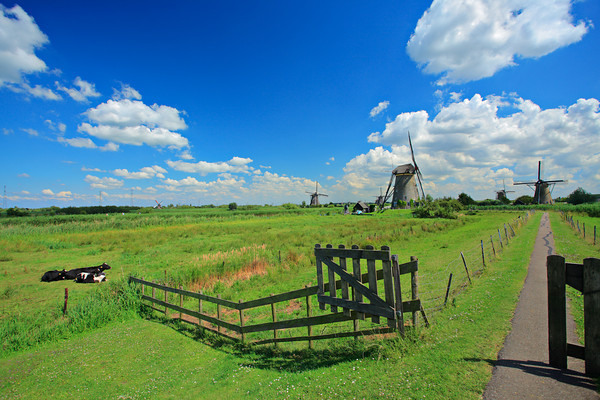 Rural scene from Kinderdijk, Holland