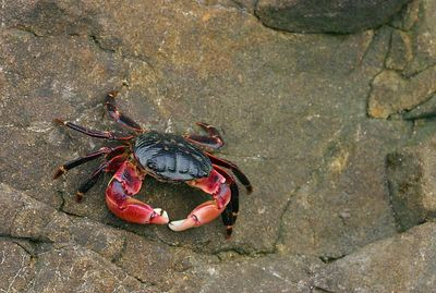 Crab on the Rock, California.
