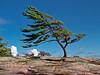 Lone Pine at Killbear Park, Ontario