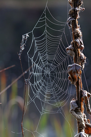 Early Morning Dew on a Spider Web