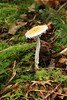 Mushroom in an Old Growth Forest