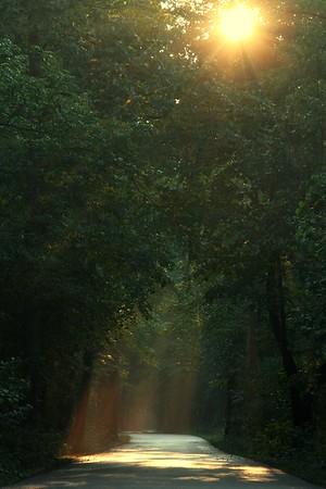 Golden Sun in Rondeau Park