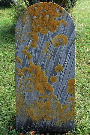 Lichen on an old gravestone