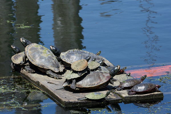 Turtles Upon Turtles