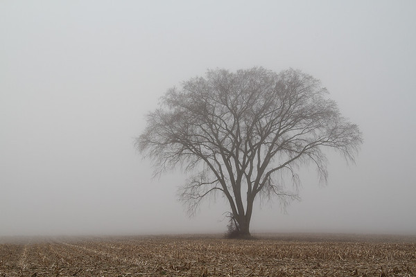 Lone Foggy Tree