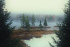 Misty Morning at Hay Lake near Algonquin Park