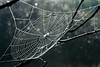 Misty Morning Web