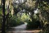 Spanish Moss Archway