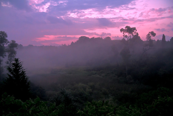 Jungle Mist at Sunset