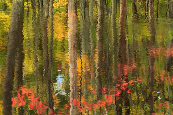 Autumn Reflections in a Pond