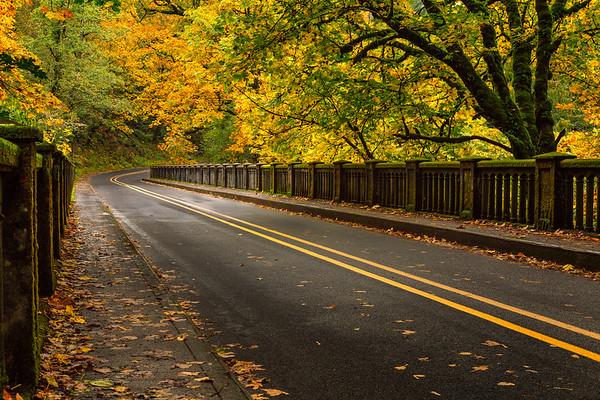 Canopy of Color - Portland, Oregon