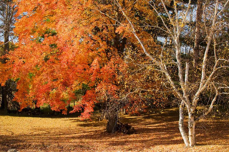 Michigan Autumn 1