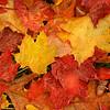 AutumnsGifts
