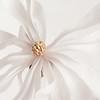 Star White 1