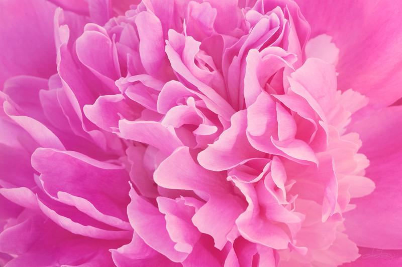 Softness of Spring 2
