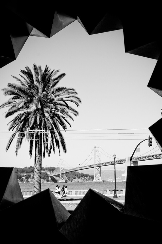 A Typical Bay Bridge and Palm