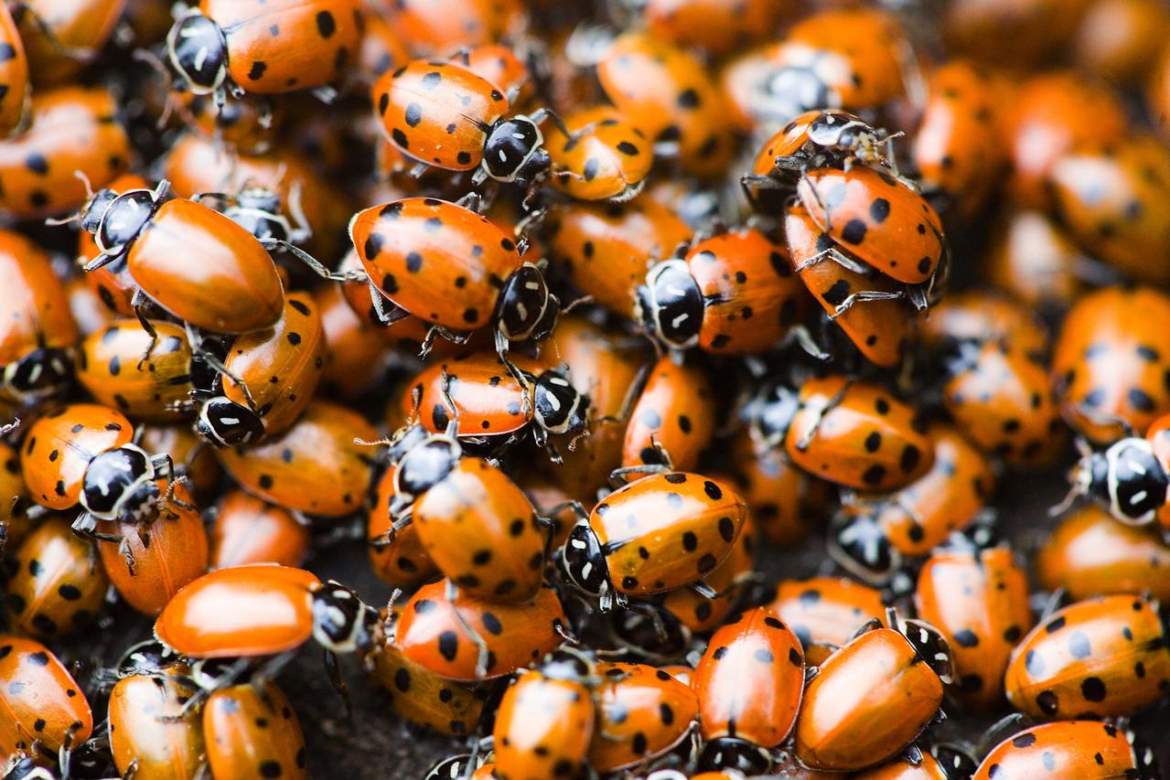 Ladybugs in the Wild, 4