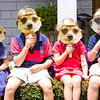 My Four Little Meerkats