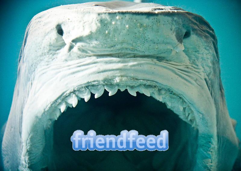 Facebook Aquires FriendFeed