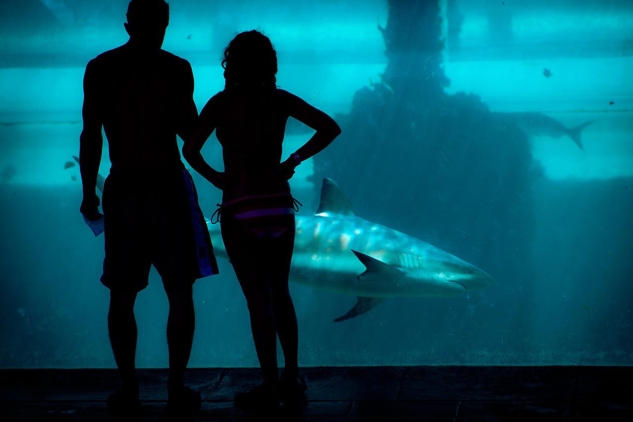Sharks, Plate 2