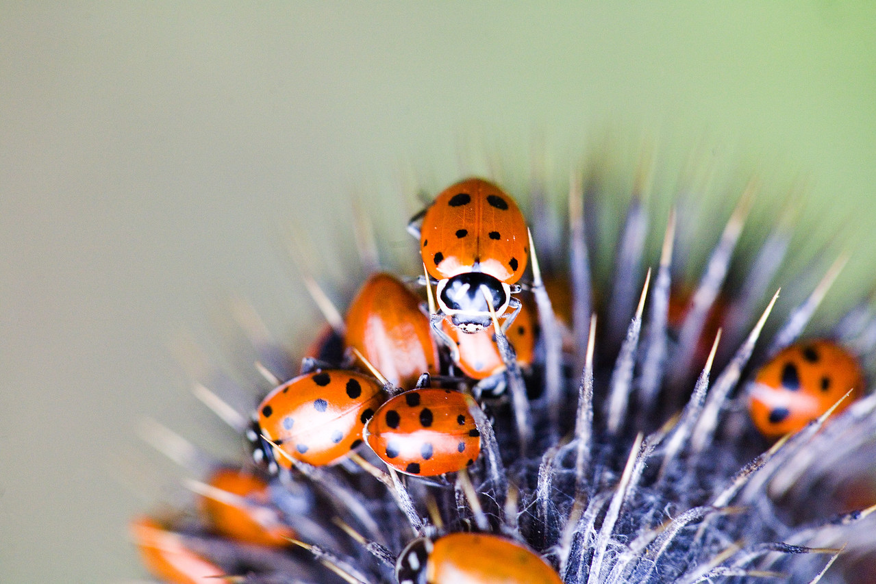 Ladybugs in the Wild, 2