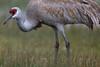 feathered raiment