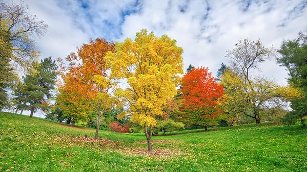 The Hoyt Arboretum