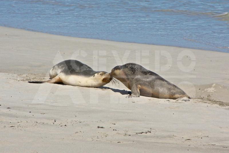 KI 20111013 115 Seal Bay M