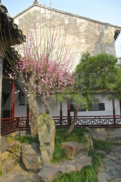 Shanghai 20130305 182 Suzhou Gardens M