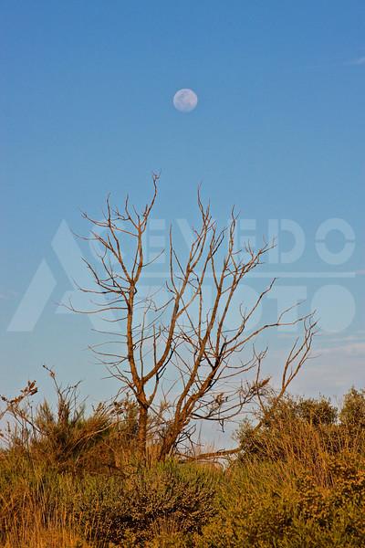 Uluru 20111010 068 Sounds of Silence Dinner - Moon M